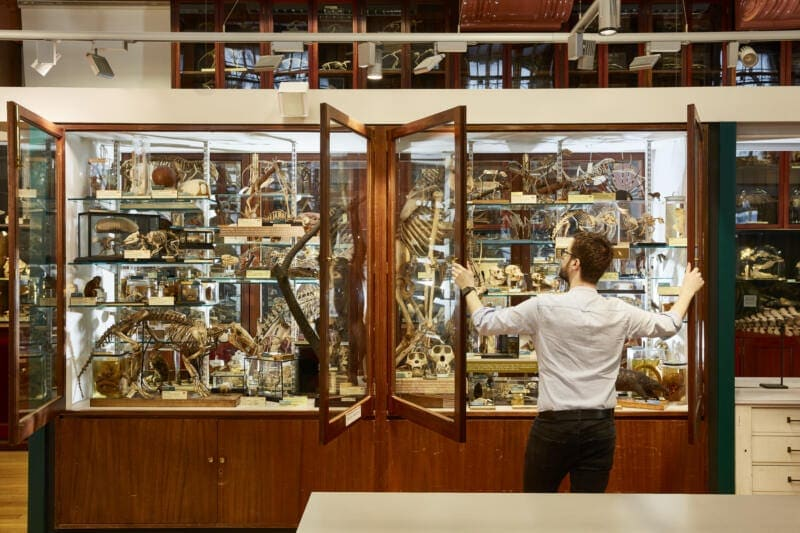 26 Unusual Museums To Visit in London (Image of Grant Zoology Museum)