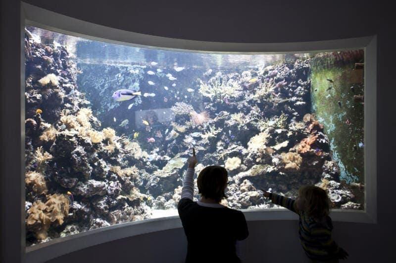 Horniman_Aquarium_CoralReef_JoelKnight